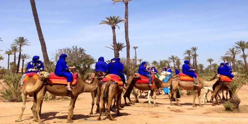 camel rideing in Marrakech