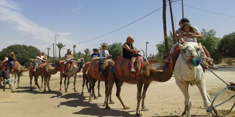 my camel ride experience 1