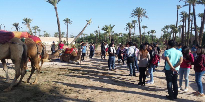 my camel ride tour